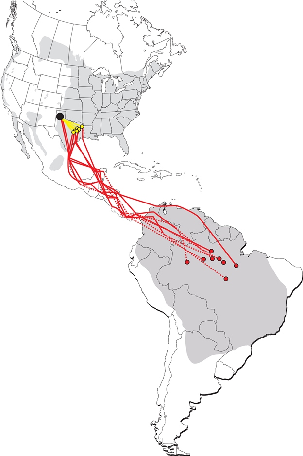 A map of the southward migration of eight Purple Martins